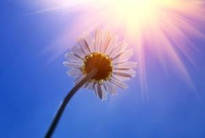 Fleurs et soleil au futur projet de la Plage de l'Est